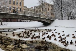 foto http://ru.focus.lv/